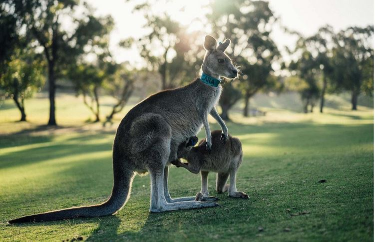 how to apply visa to australia from uk
